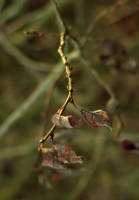 Branch by mateuszskibicki1