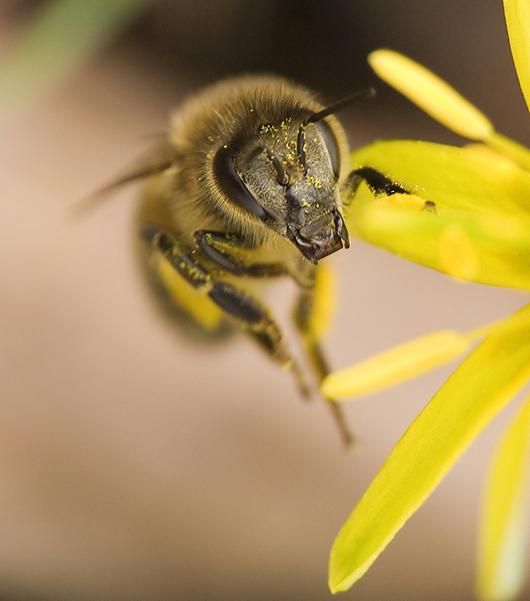Bee by mateuszskibicki1
