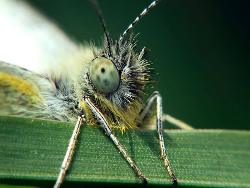 Butterfly - Motyl 4 by mateuszskibicki1