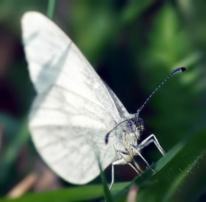 Butterfly - Motyl 7 by mateuszskibicki1