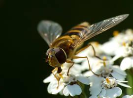 Fly - Mucha 15