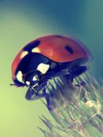 Ladybird 3 ink by mateuszskibicki1