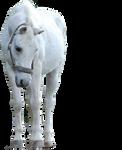 White Horse Precut