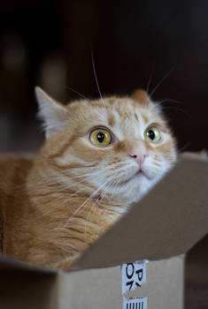 Yokit... when man sneezes