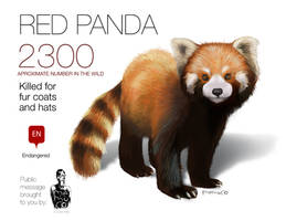 RED PANDA graphic feel free to share by memuco