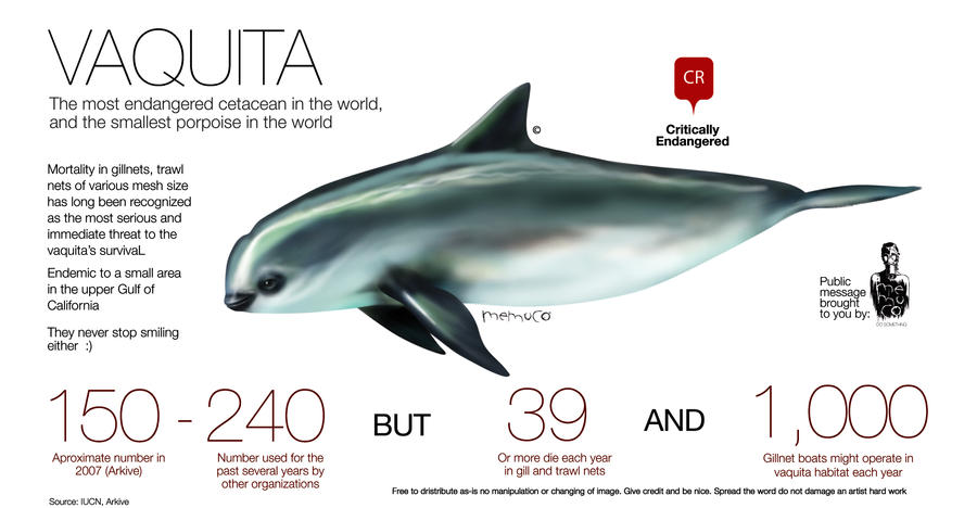 Vaquita the most endangered cetacean in the world by memuco
