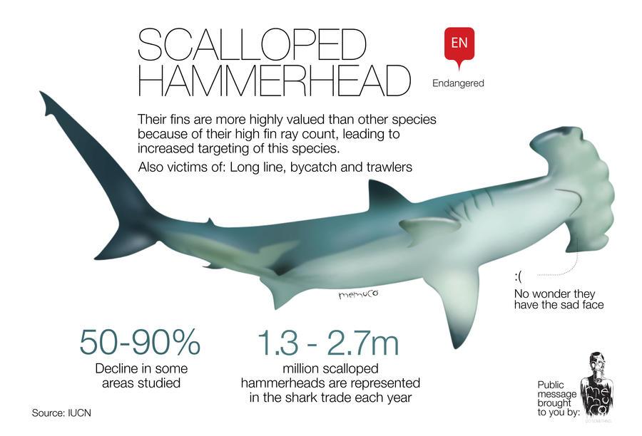 Scalloped hammerhead Endangered by memuco on DeviantArt