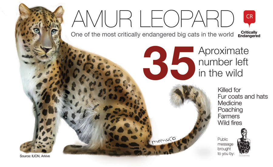 Amur Leopard only #35 remaining by memuco