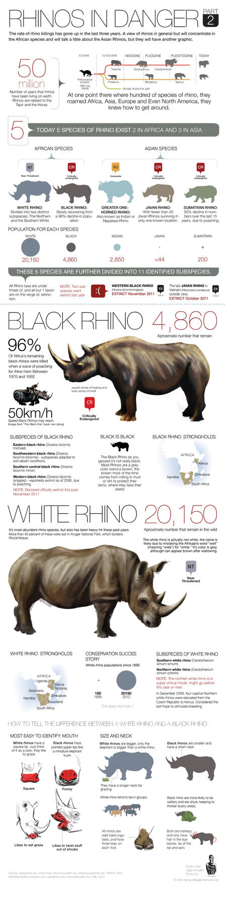 RHINO POACHING part2 by memuco