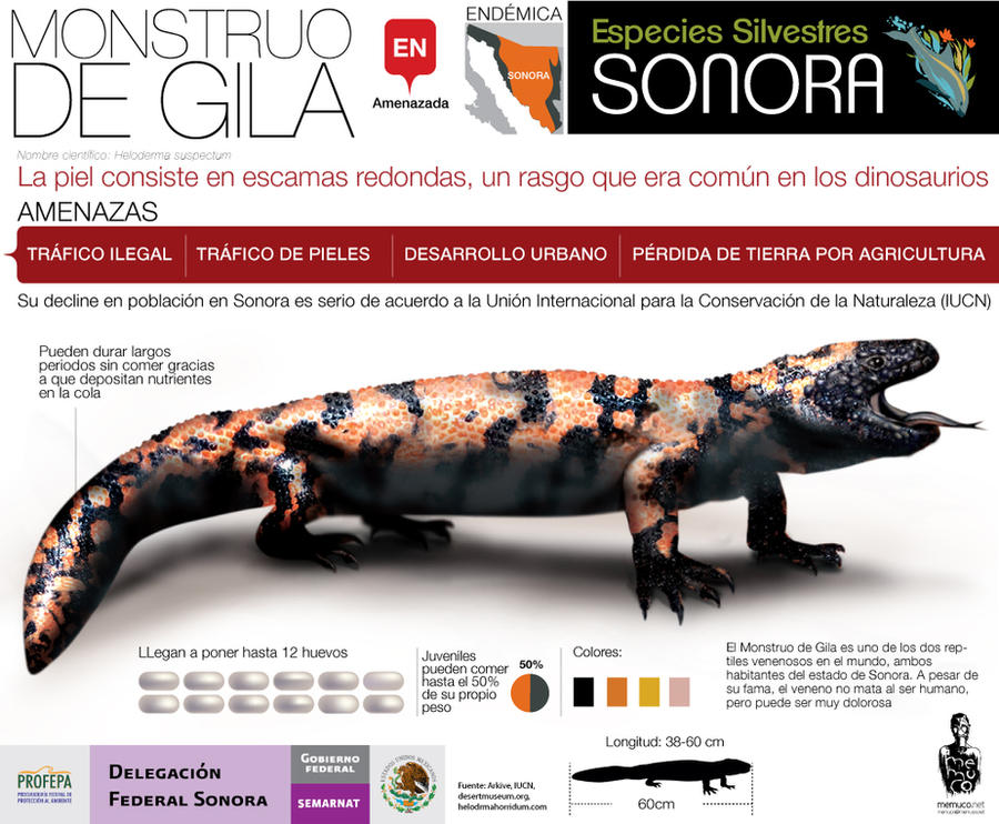 Gila Monster by memuco