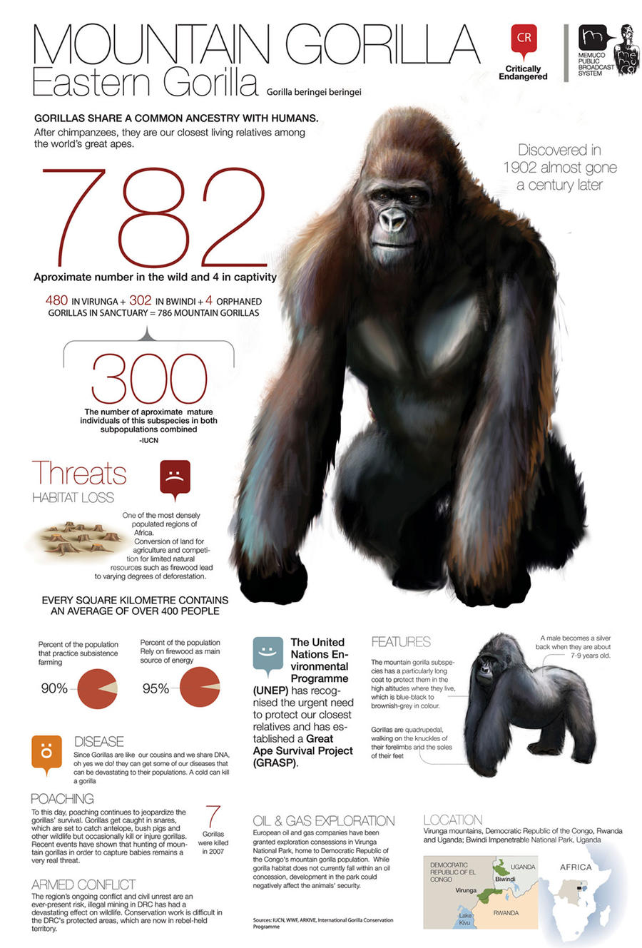 782 mountain gorillas by memuco on DeviantArt
