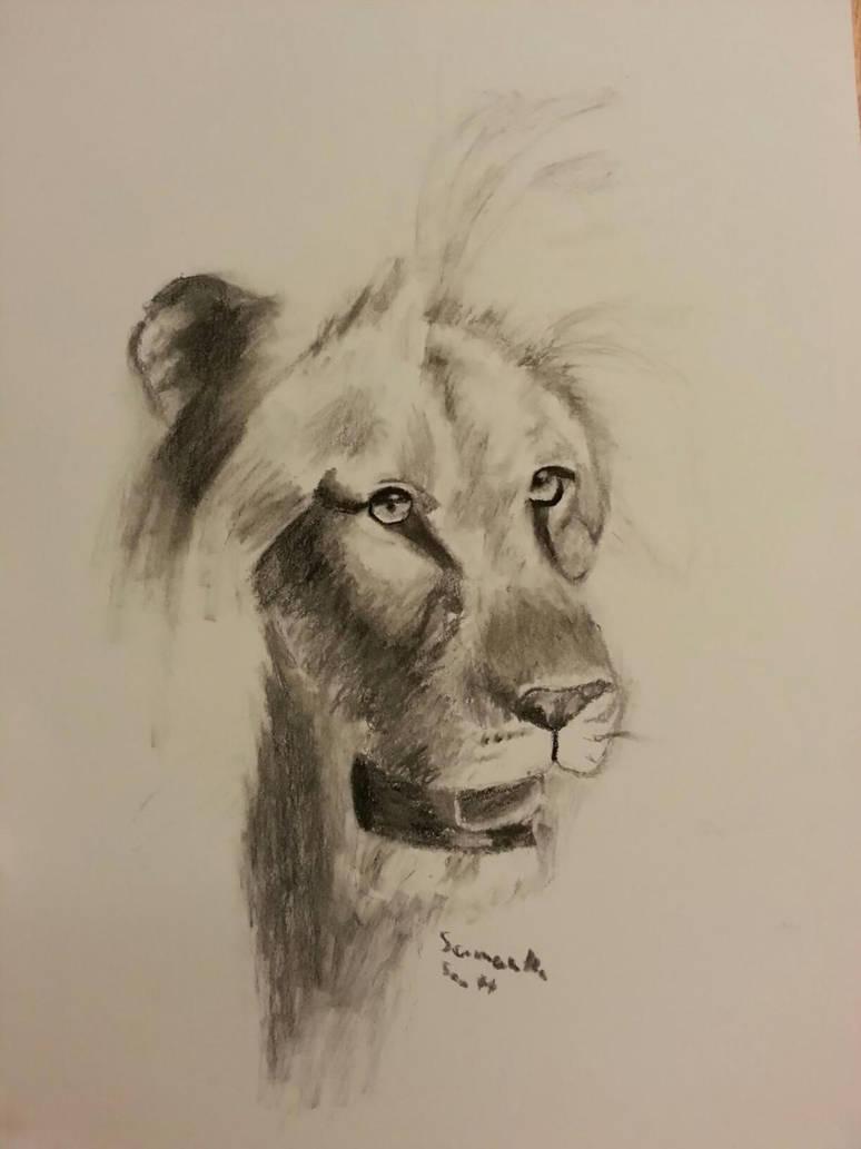 Charcoal Lion