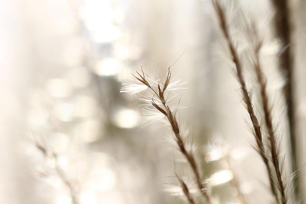 luminance. by ilareen