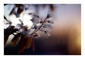 Flowers V by K4PP4
