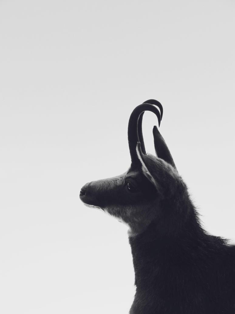 a goat by F-0-X-Y
