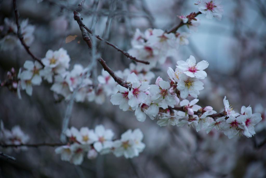 160128 Crest flowerbranches by nightandrei