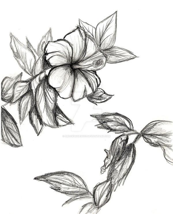 Flowers by GreekGodess07
