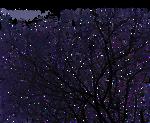 Tree silhouette Stock II. PNG