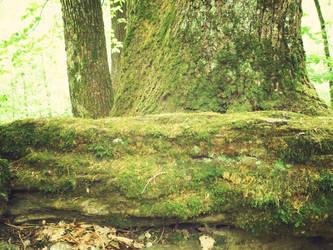 tree stock 3