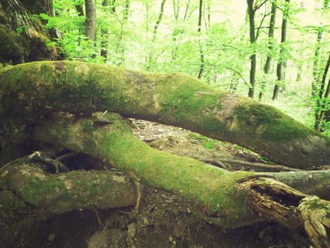 tree stock 4