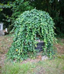 Cemetery Stock