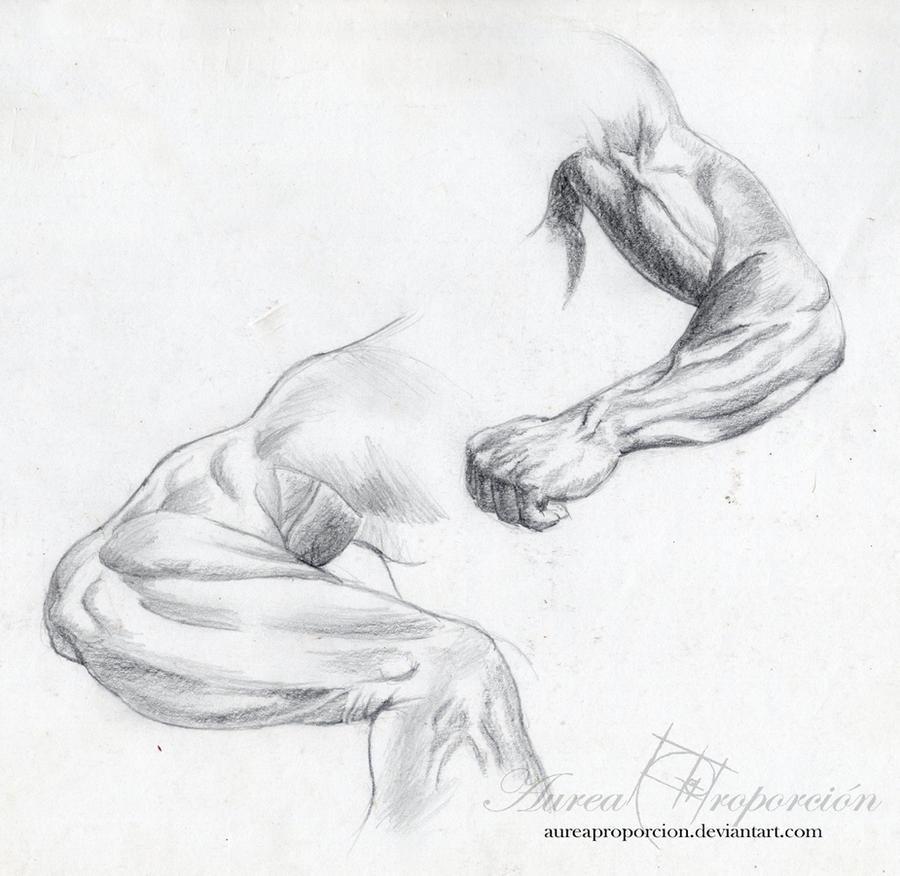 Arm studies by AureaProporcion