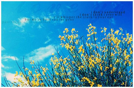 Fleurs. Flowers_by_ivyz