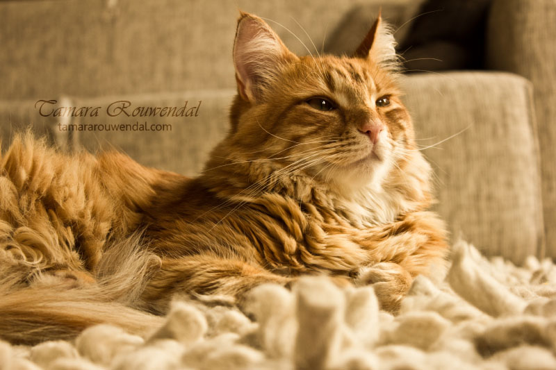 King of the house by TammyPhotography