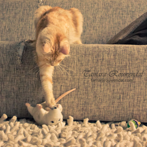 Game over mouse by TammyPhotography