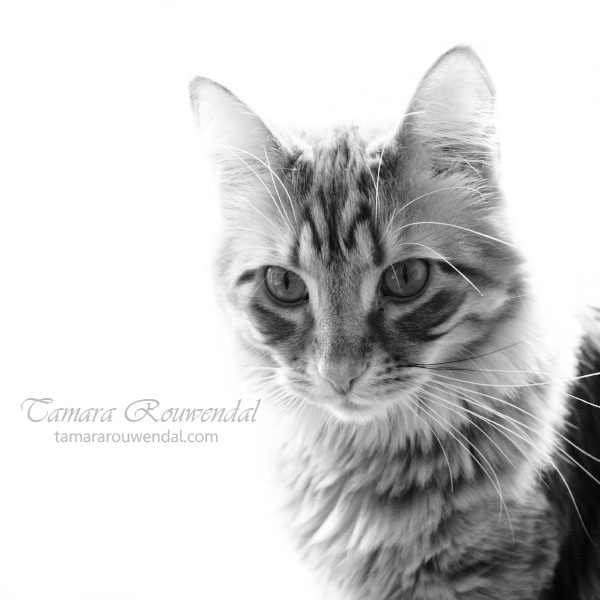 Bink by TammyPhotography
