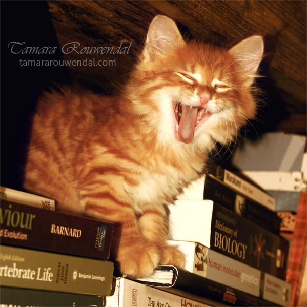 Let's hear you Roar! by TammyPhotography