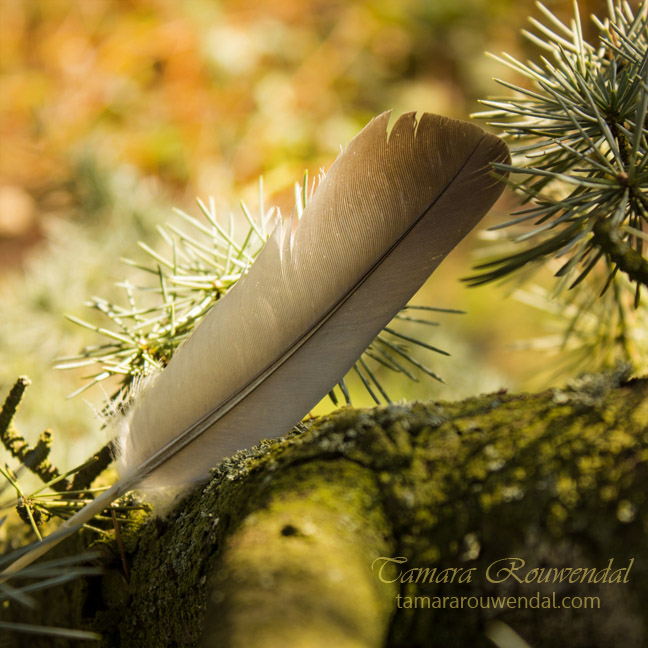 Fallen Feather by TammyPhotography