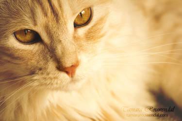 My friend by TammyPhotography