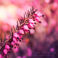 Closer to nature by TammyPhotography