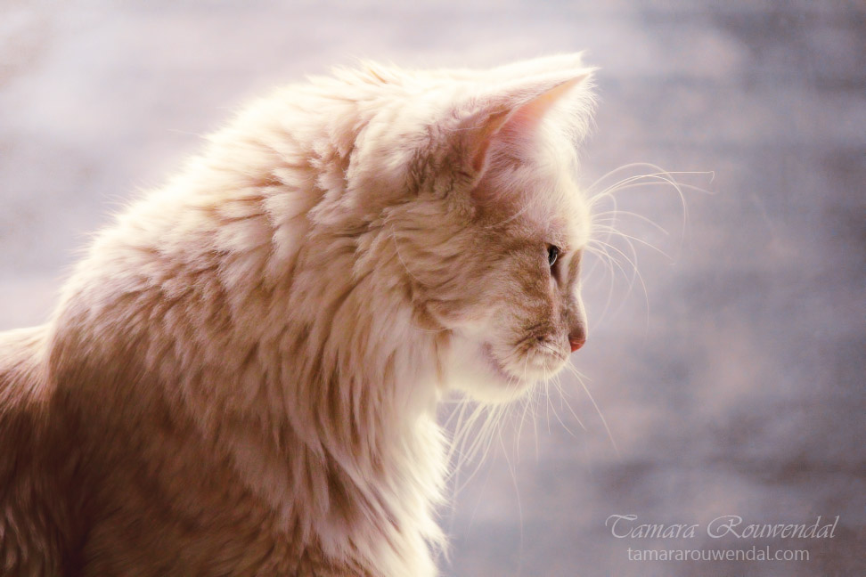 Meditation by TammyPhotography