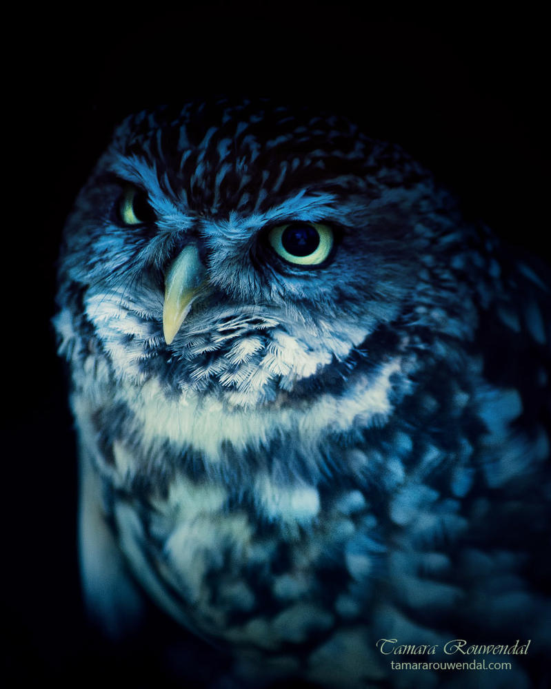 Wise owl by TammyPhotography