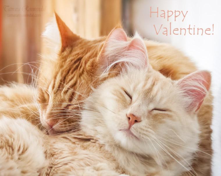 Happy Valentine by TammyPhotography