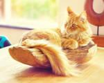 Fruit bowl kitty