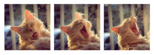 The art of yawning