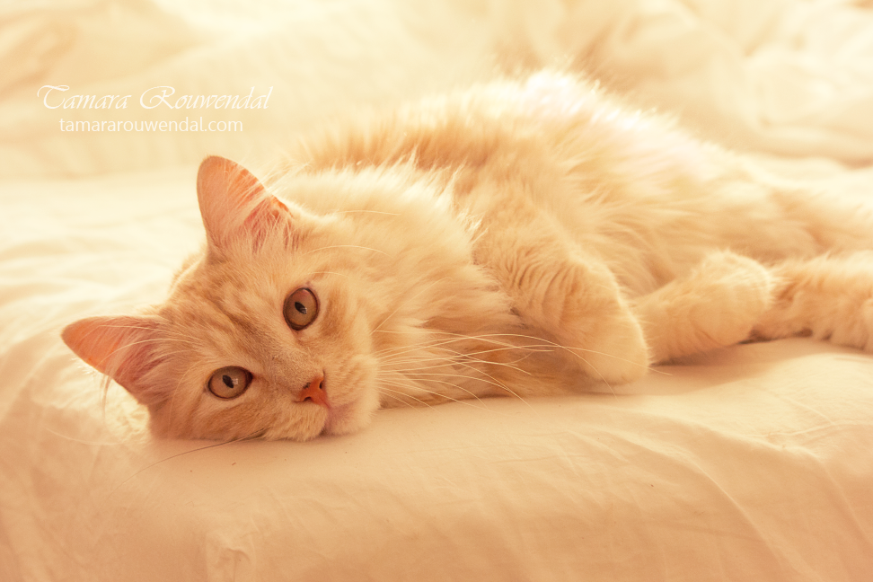 Cutie by TammyPhotography
