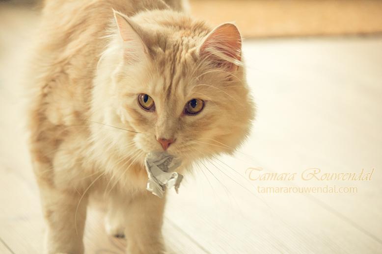 Go Fetch by TammyPhotography