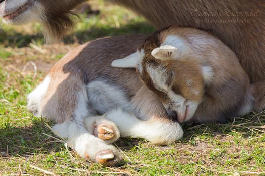 Sleep Little One