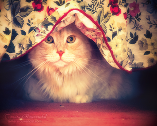 Hiding Place by TammyPhotography