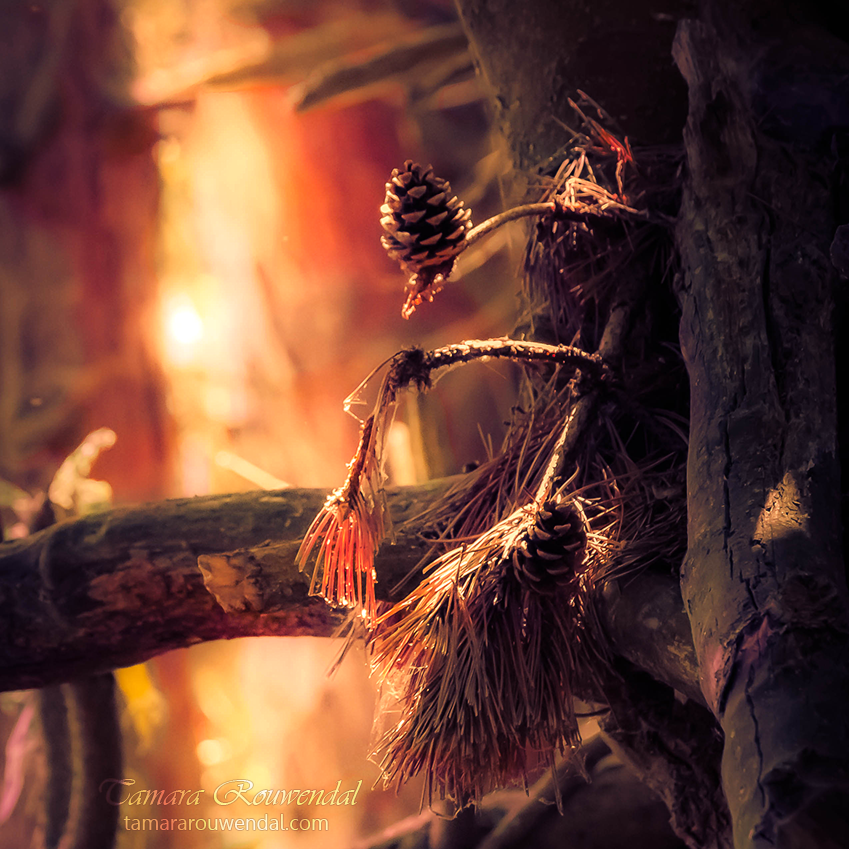 Autumn pinecones by TammyPhotography