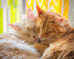 Sleepy Brothers by TammyPhotography