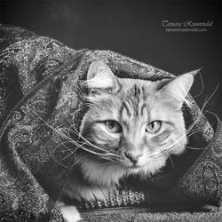 Dali Cat by TammyPhotography