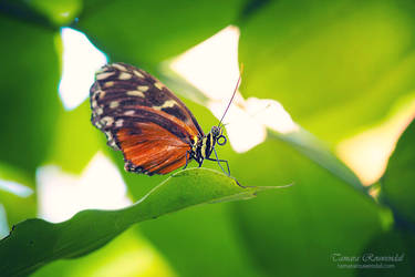 Beauty of the Insect World