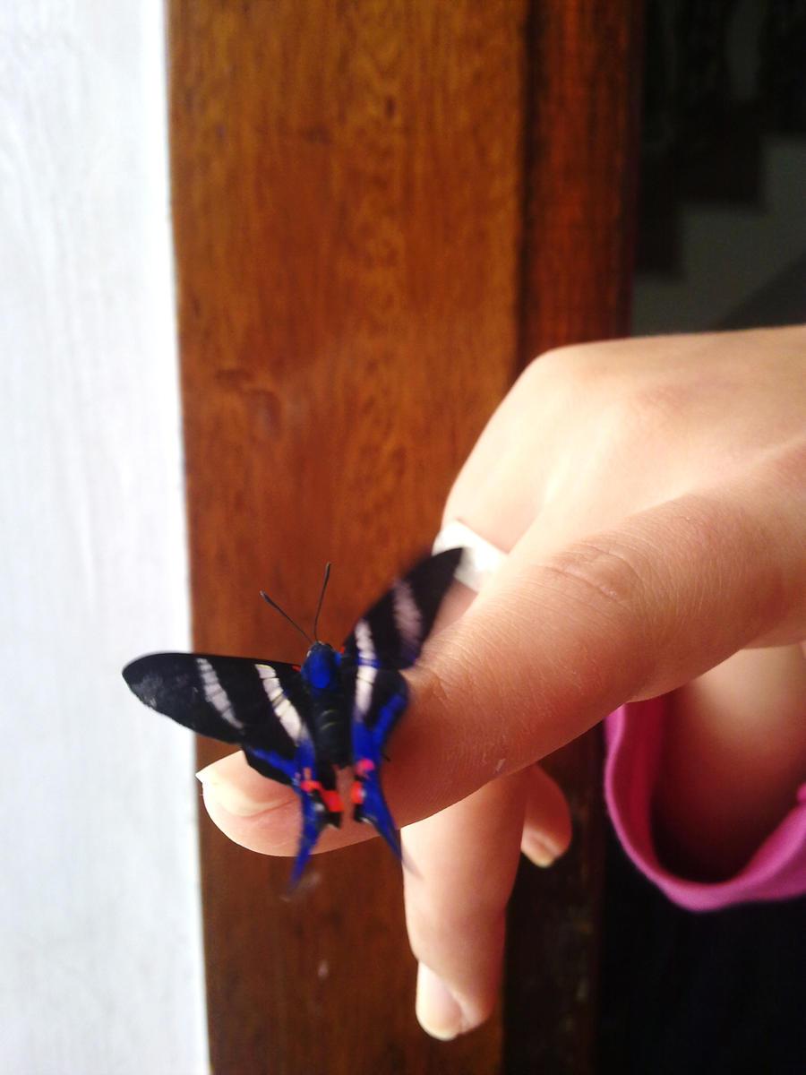 The Butterfly by biel12