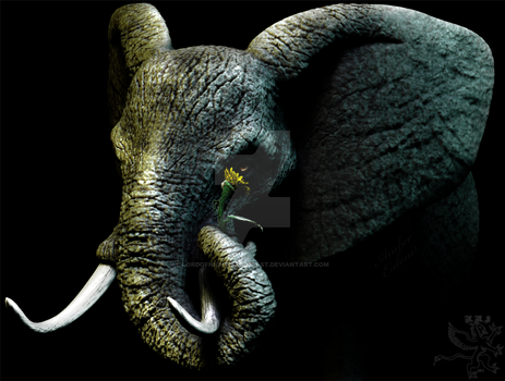The Elephant And The Sunflower By Lordofnightmarespast On Deviantart 42+ sunflower png images for your graphic design, presentations, web design and other projects. deviantart