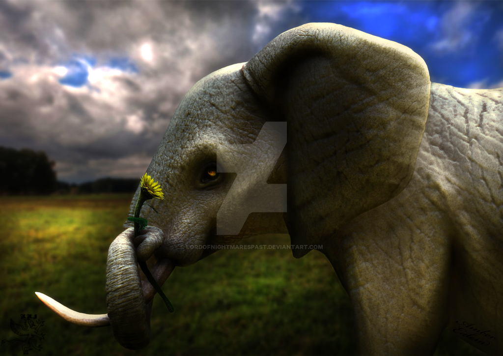 The Elephant And The Sunflower V2 By Lordofnightmarespast On Deviantart Please use search to find more variants of pictures and to choose between available options. the elephant and the sunflower v2 by